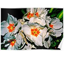 Flowers - Orange, White Poster