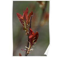 Striking Spring Reds Poster