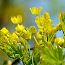 Yellow flowers by Dfilyagin