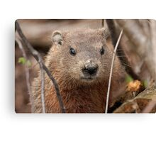 Woodhog or Groundchuck? Canvas Print
