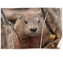 Woodhog or Groundchuck? Poster