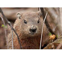 Woodhog or Groundchuck? Photographic Print