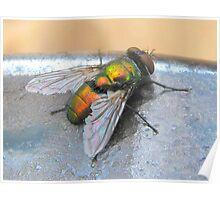 Common Green Bottle Fly Poster