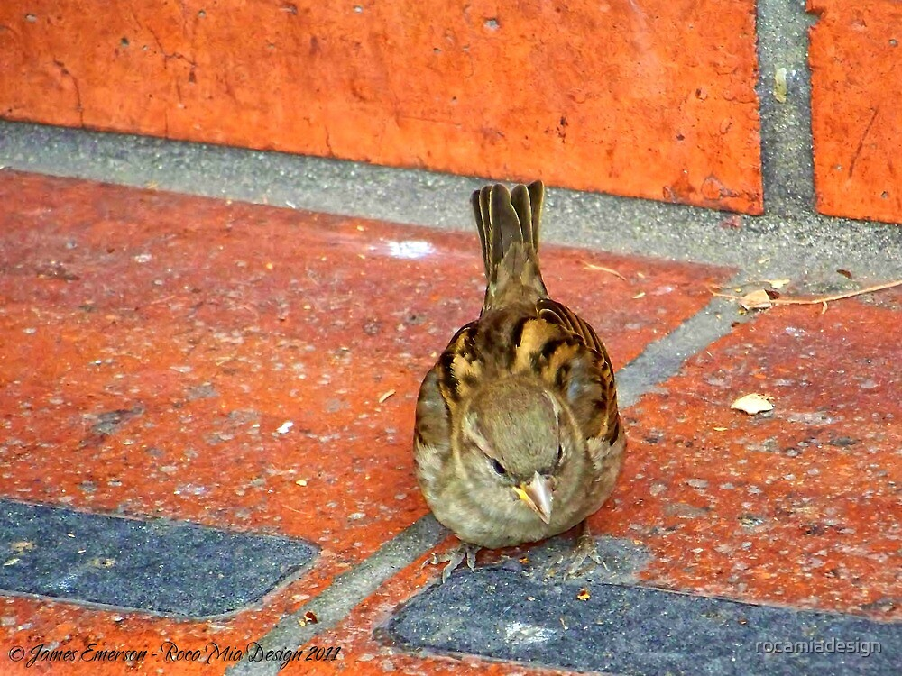 Another Tourist (House Sparrow) by rocamiadesign