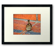 Another Tourist (House Sparrow) Framed Print