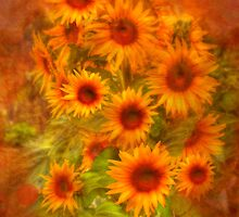 Basking in Sunflowers - Private Garden, Kanmantoo, SA by Mark Richards
