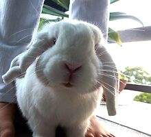 Life through a rabbit's perspective. by BonnieRose
