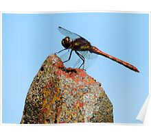 Green and Rust Dragonfly Poster