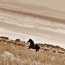 A Frisk Amongst the Hay by Julie Sleeman