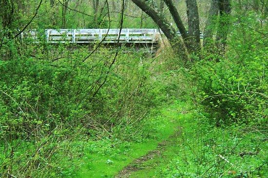 Springtime on the Alleghney Bike Trail  by Geno Rugh