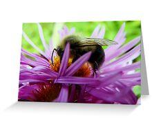 Harvesting Honey Greeting Card
