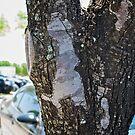 A tree in a parking lot by Ann Reece