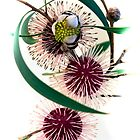 Pincushion Hakea by pcbermagui