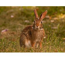 Regal Rabbit Photographic Print