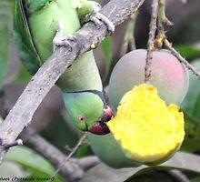Rose-ringed parakeet at Saturday breakfast by SeeThrough