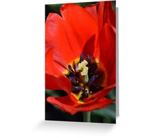 An Array of Colors. Greeting Card