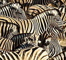 Zebras I by Andy-Kim Möller