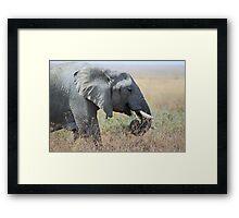 African Elephant Portrait, Serengeti, Tanzania. Framed Print
