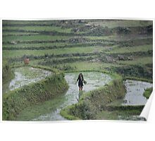 rice fields. sapa. vietnam Poster