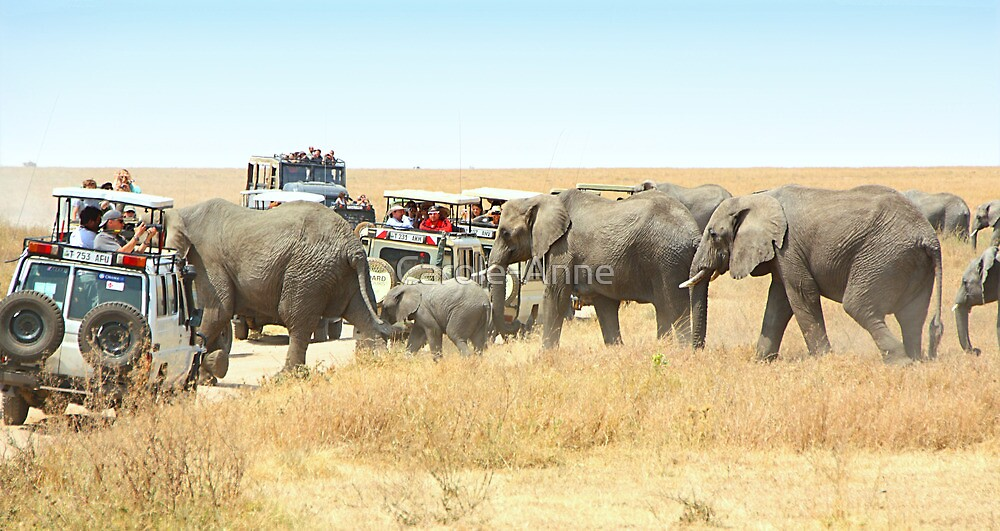 Elephants Have Right Of Way, Serengeti, Tanzania. by Carole-Anne