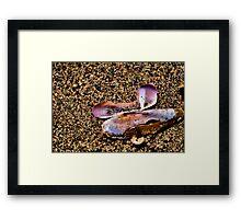 Mussel Shell Framed Print