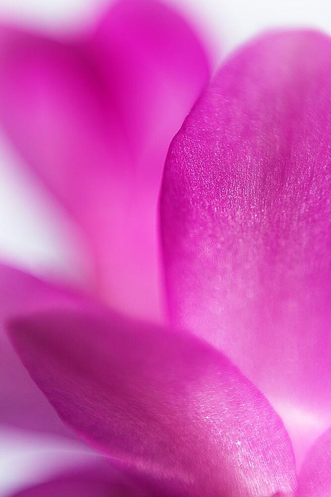 Petals by Leon Ritchie