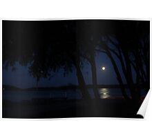 Moonlit Trees - Woy Woy Poster