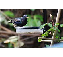 The Starling Photographic Print