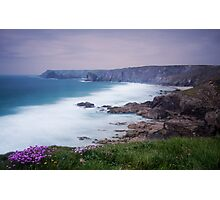 Sea Thrift at Pentreath Photographic Print