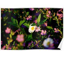 Tiny daisy Poster