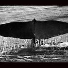 Whale tail - Kaikoura New Zealand by Deb Gibbons