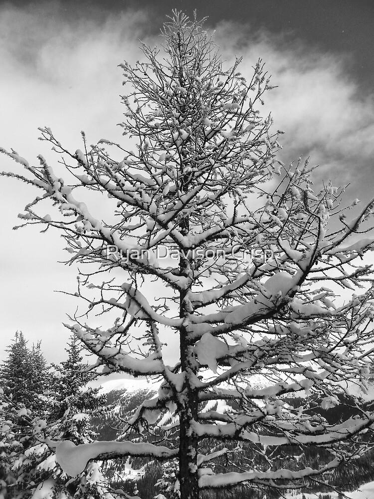 Snowy Tree by Ryan Davison Crisp