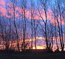 Sweet Sunrise by Julia Hainsworth