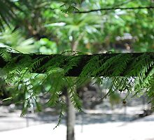 Florida  Cypress by Tracey Hampton
