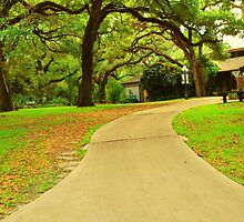 Follow the path by Tracey Hampton