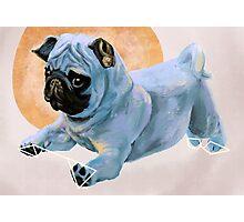 Pug(nacious) Photographic Print