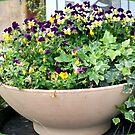 Decorative plants in Falicon Village by daffodil