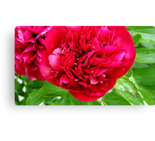 Peony after Rain Canvas Print