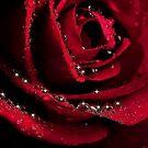 GLITTER  ROSE * by RoseMarie747