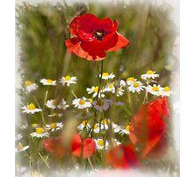 Poppy Photographic Print