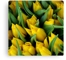 Tulips. II Canvas Print