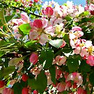 Crabapple (by general consensus) by Nancy Richard