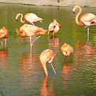 Flamingos by Lilian Marshall