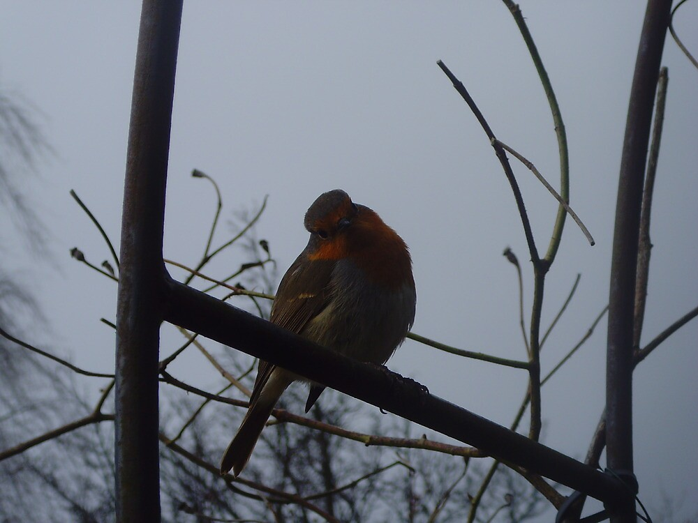 Robin - keswick, lake district by demon6421