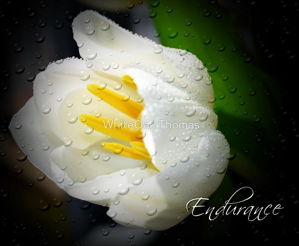 Endurance by Eva Thomas