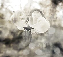 Vintage Wildflower by BPhotographer