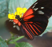 stretching butterfly by LisaBeth