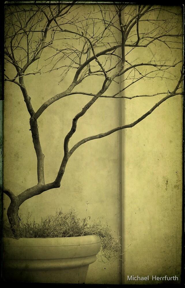 Tree by Michael  Herrfurth
