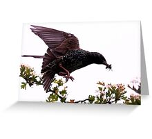 Caught On The Fly Greeting Card