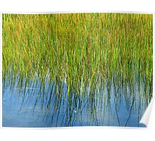 Reflection of Reeds - Abstract from Nature Poster